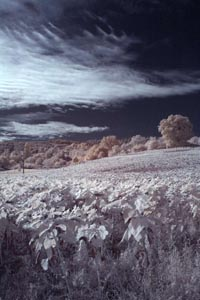 Marche in infrared